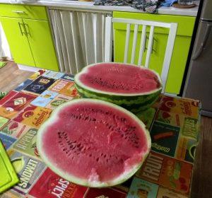 10kg Wassermelone
