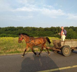 Viele Pferdekutschen zu sehen in Rumänien