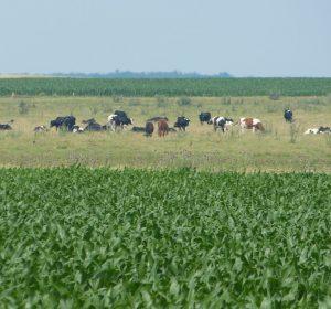 Viehwirtschaft südlich der Karpaten